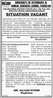 Jobs In University Of Veterinary And Animal Sciences UVAS Lahore