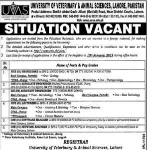 Jobs In University Of Veterinary And Animal Sciences UVAS
