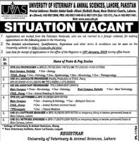 Jobs In University Of Veterinary And Animal Sciences UVAS