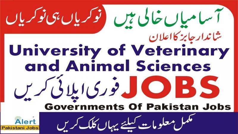 Jobs in University Of Veterinary & Animal Sciences UVAS